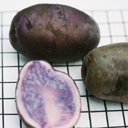 Swedish blue peruvian purple potato antioxidant healthy 2 fresh tubers